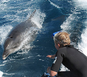 Dolphins and marine mammels are sometimes seen in the Abel Tasman